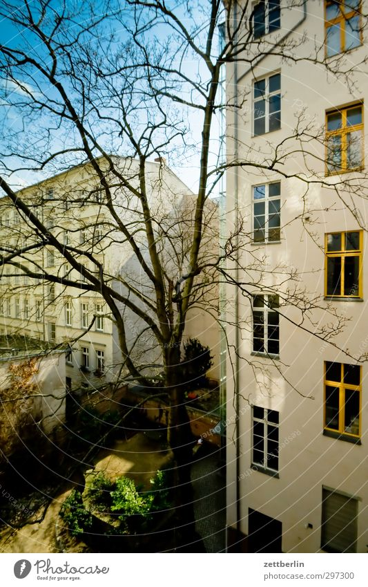 Yard with sun Living or residing House (Residential Structure) Spring Climate Climate change Weather Beautiful weather Tree Facade Emotions Old building Berlin