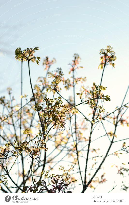 Sky Tree Leaf Spring Blossom Bright Natural Joie de vivre (Vitality) Spring fever