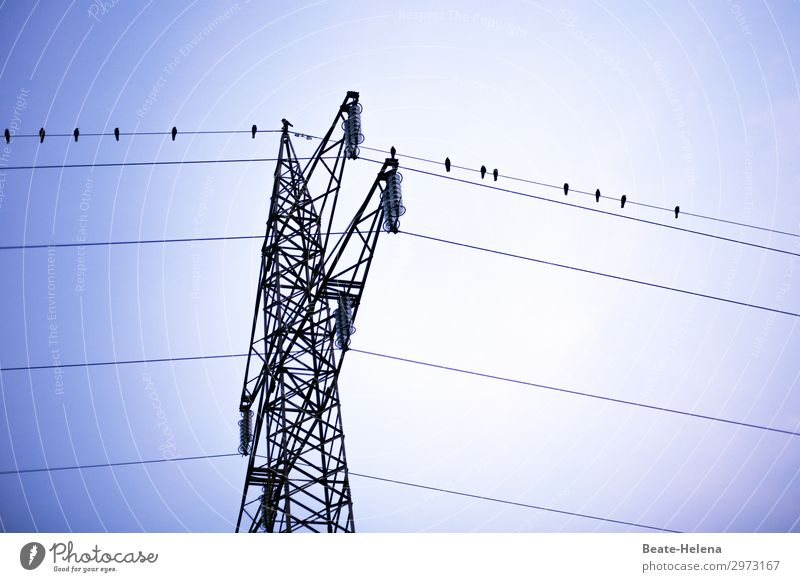 Energetic meeting Vacation & Travel Cable Power transmission Electricity pylon Technology Energy industry Bird Observe Relaxation Flying Looking Sit Esthetic