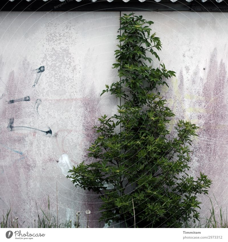 ...or more beautiful? Plant Tree Grass Building Wall (barrier) Wall (building) Roof Line Growth Old Simple Broken Trashy Gray Green Violet Black White