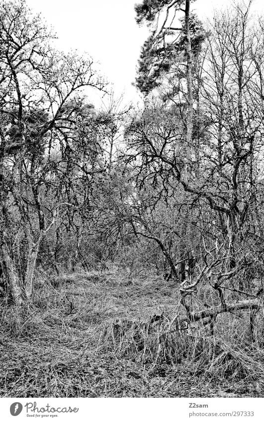 Nature Loneliness Landscape Calm Forest Environment Dark Spring Sadness Natural Dream Moody Fear Bushes Gloomy Change