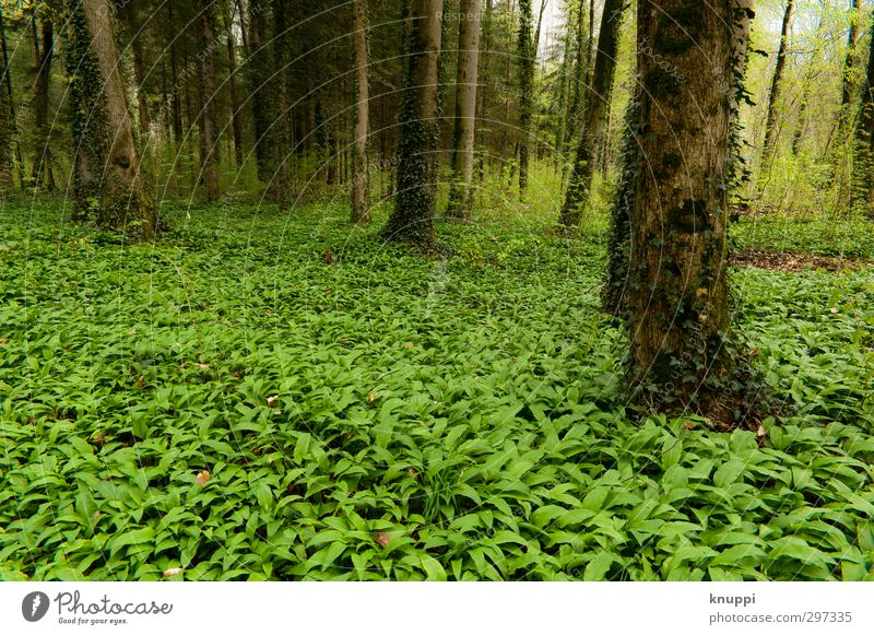 green Environment Nature Landscape Plant Earth Air Sun Sunlight Spring Climate Beautiful weather Tree Grass Ivy Leaf Foliage plant Wild plant Forest Exotic