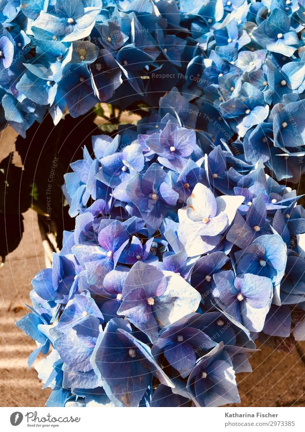 Summer Plant Blue Beautiful White Flower Leaf Autumn Blossom Spring Blossoming Violet Bouquet