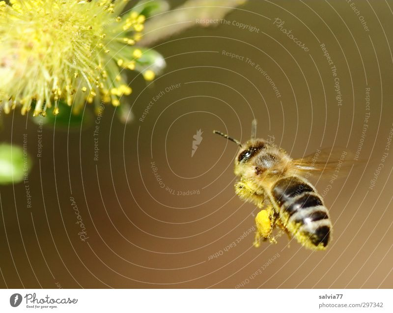 Landing approach 1 Environment Nature Plant Spring Beautiful weather Bushes Blossom Wild plant Animal Farm animal Wild animal Bee Work and employment Blossoming