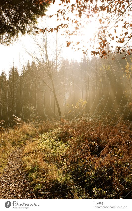 autumn forest Hiking Environment Landscape Plant Earth Air Sun Sunlight Autumn Fog Tree Grass Forest Hill Breathe Illuminate Relaxation Peace Moody