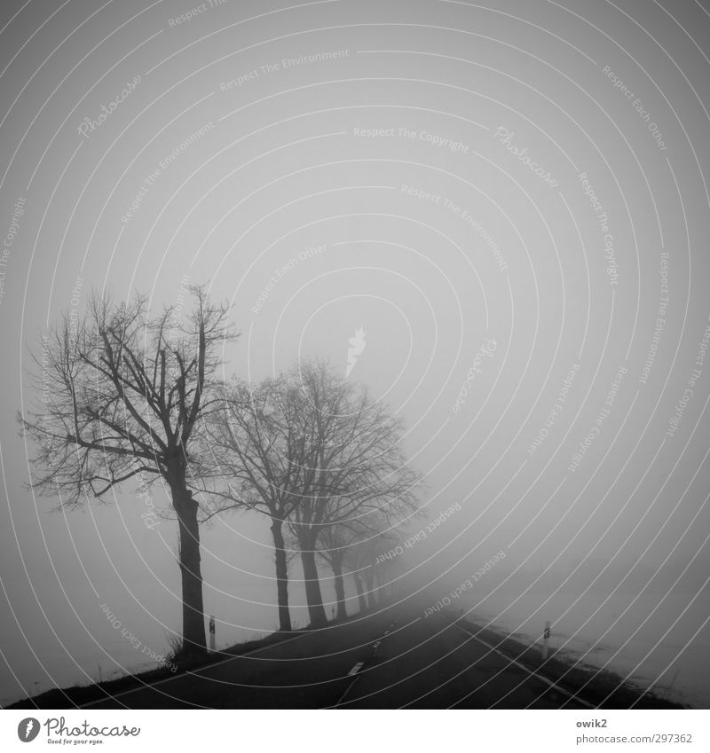 Nature Tree Landscape Winter Dark Environment Sadness Street Snow Ice Fog Gloomy Signs and labeling Transport Dangerous Frost