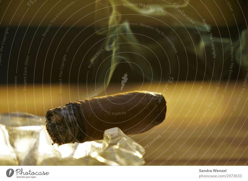 Cohiba Party To enjoy Smoking Cigar production Cuba Tobacco Tobacco plantation Valle de Viñales Havana Exterior shot Deserted Evening