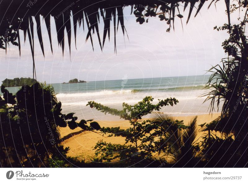 Beach Palm tree Hiding place Indonesia Los Angeles Sumatra