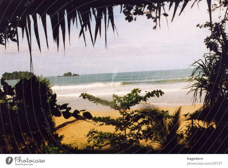 Sea through Djungle Sumatra Indonesia Beach Palm tree Los Angeles Hiding place