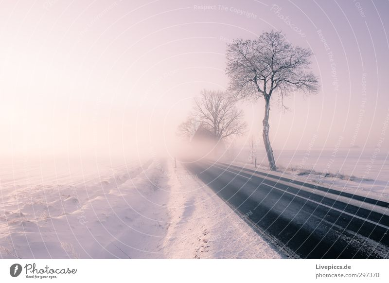 Street in the fog Nature Landscape Plant Sky Cloudless sky Sun Sunrise Sunset Sunlight Winter Weather Beautiful weather Fog Ice Frost Snow Tree Bushes