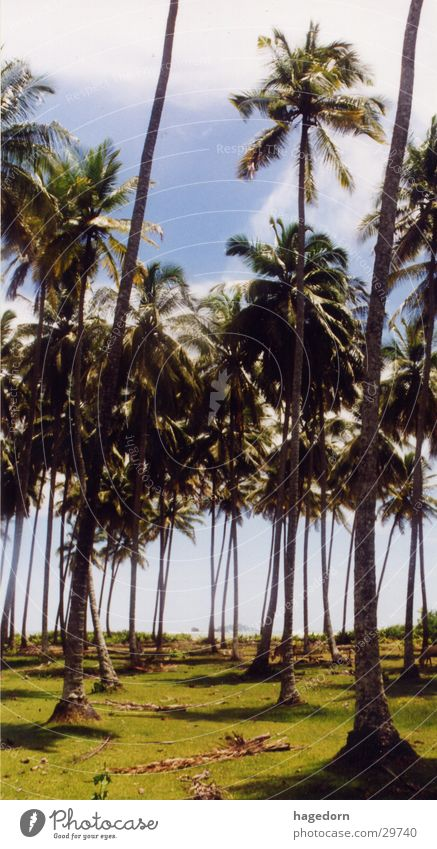 cathedral Palm tree Beach Sumatra Indonesia Lanes & trails Tao