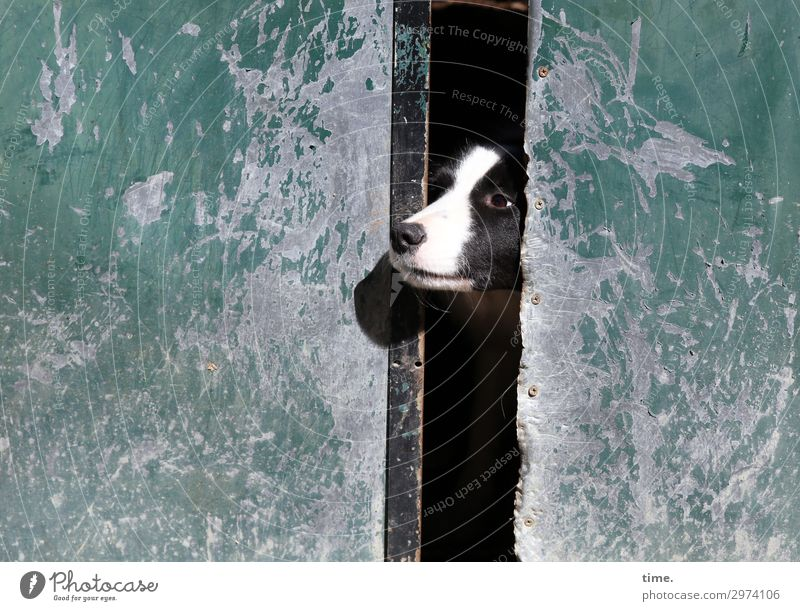 Dog Animal Loneliness Wall (building) Time Wall (barrier) Moody Perspective Wait Observe Curiosity Discover Hope Protection Safety Pet