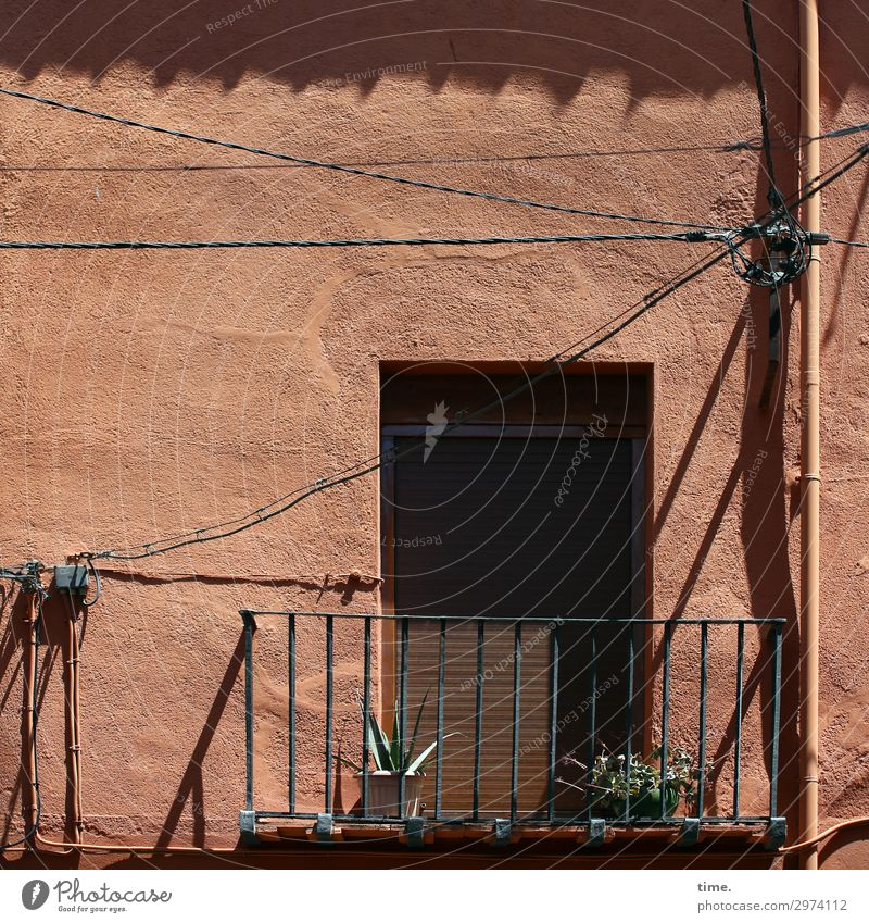 Stories of the fence (XXII) Energy industry Beautiful weather Plant Balcony plant Cactus Lisbon Downtown House (Residential Structure) Wall (barrier)