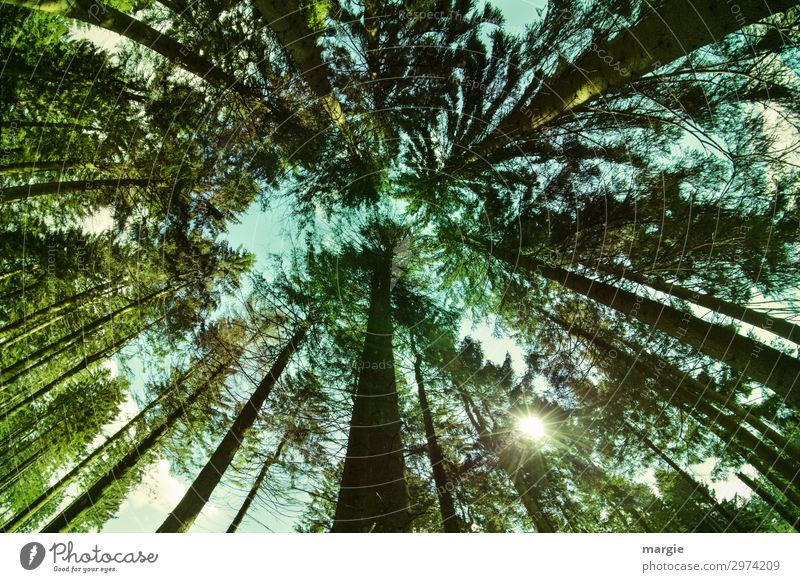 Sky Vacation & Travel Nature Summer Plant Green Landscape Sun Tree Forest Far-off places Environment Spring Brown Hiking Beautiful weather