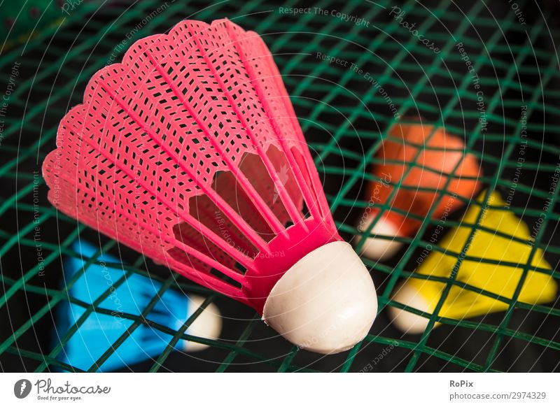 Badminton birdie on a racket. Lifestyle Style Design Healthy Athletic Fitness Wellness Leisure and hobbies Playing Sports Education Kindergarten School Economy