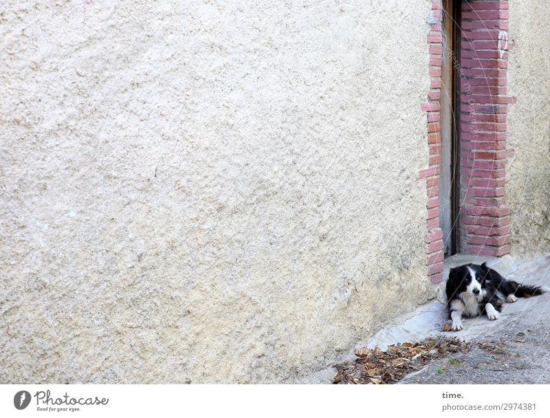 door mat House (Residential Structure) Wall (barrier) Wall (building) Door Animal Pet Dog 1 Stone Observe Lie Looking Wait Watchfulness Serene Patient Calm