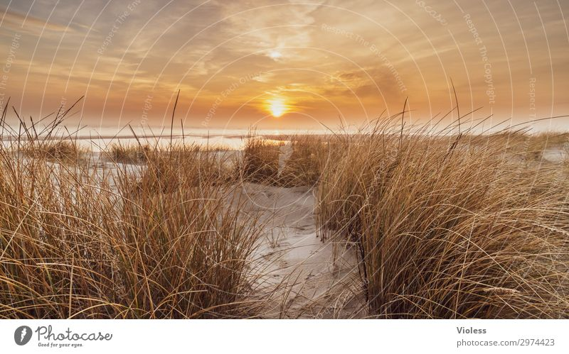time-out Sunset Orange Beach Dune Beach dune Ocean Marram grass Clouds Denmark Vacation & Travel Relaxation North Sea