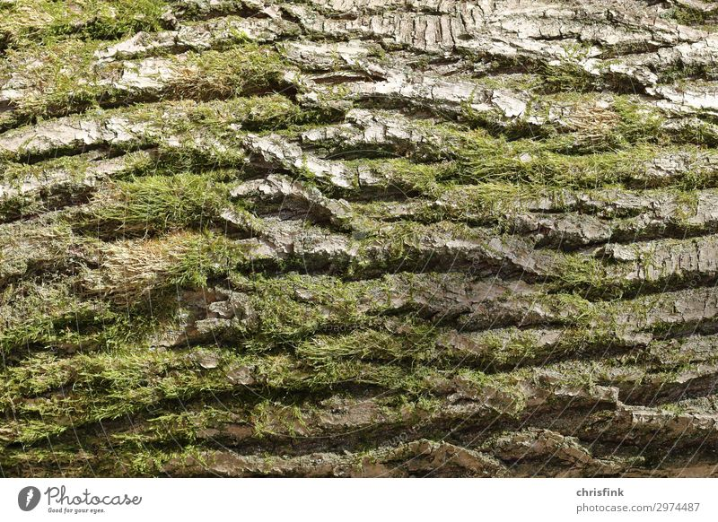 Nature Old Plant Green Tree Forest Natural Brown Growth Moss Tree bark Carrying