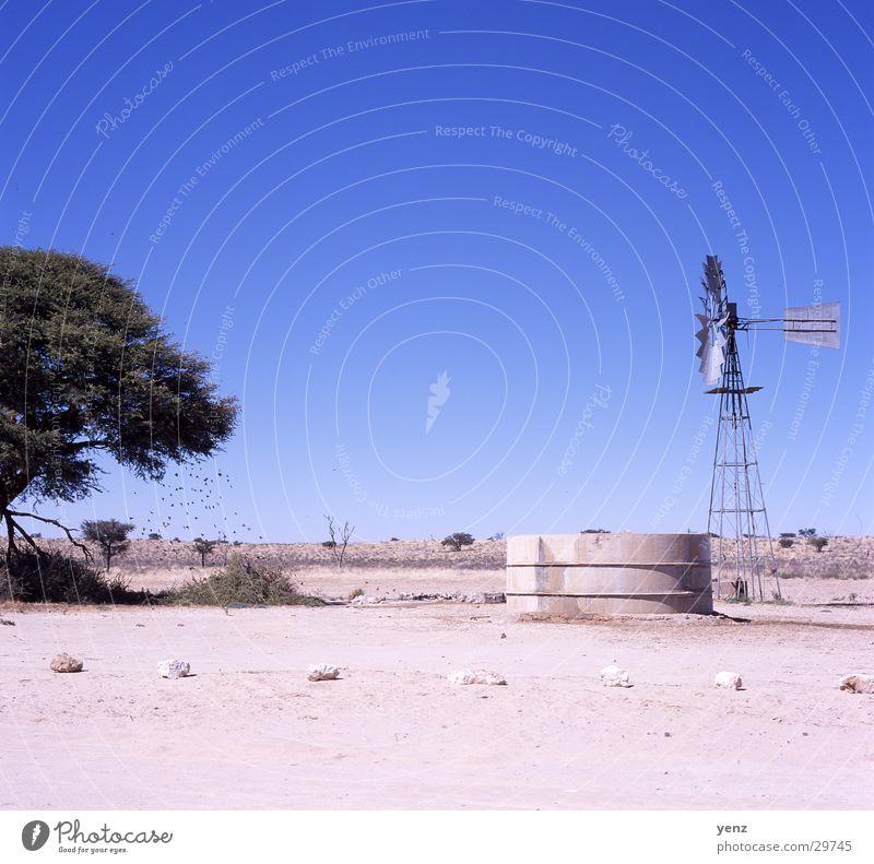 Traenke Kalaharie Africa kalaharie Desert Water Watering Hole