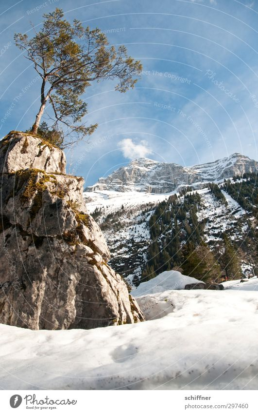 Sky Nature Beautiful Tree Landscape Winter Environment Mountain Cold Snow Rock Ice Beautiful weather Frost Alps Peak