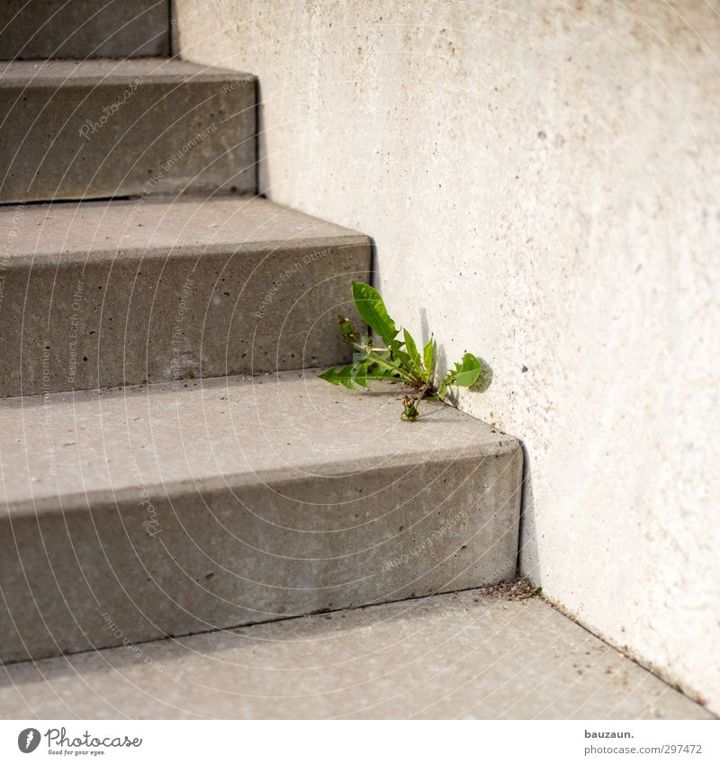 weeds don't go away. Garden Environment Nature Plant Flower Leaf Blossom Weed Park Wall (barrier) Wall (building) Stairs Lanes & trails Concrete Line Blossoming