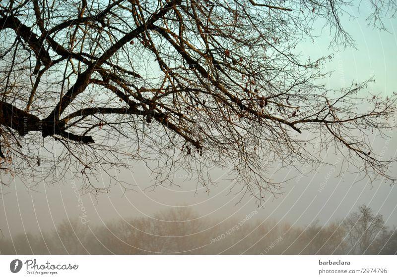 nebulous evening mood Nature Landscape Elements Sky Autumn Winter Fog Tree Bushes Bright Emotions Moody Calm Climate Change Colour photo Subdued colour