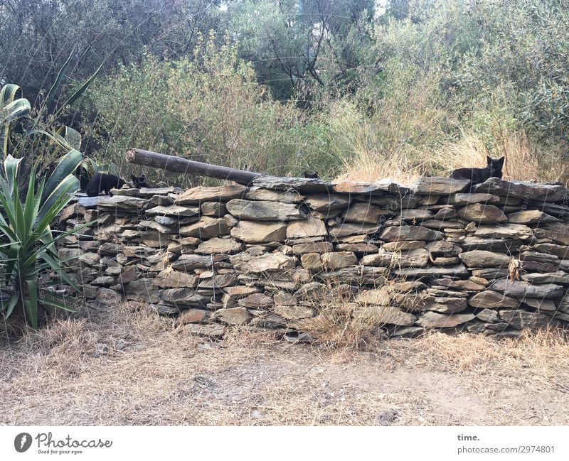 community Beautiful weather Plant Park Cadaques Wall (barrier) Wall (building) Animal Pet Cat Group of animals Stone Observe Looking Sit Safety Protection