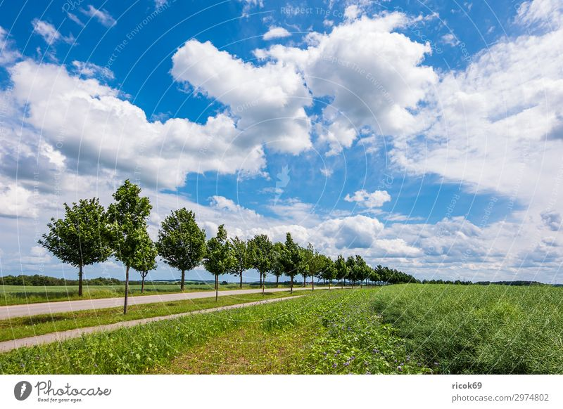 Field with trees near Rostock Relaxation Vacation & Travel Tourism Agriculture Forestry Environment Nature Landscape Plant Clouds Spring Tree Flower Grass