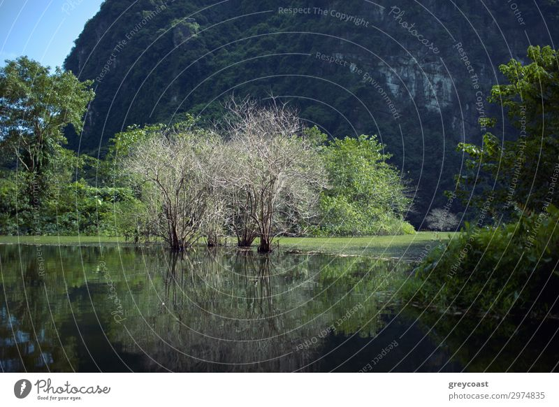 Landscape with dry trees in water among the greenery against limestone mountain in Trang An, Vietnam Summer Mountain Environment Nature Tree Hill Rock Lake