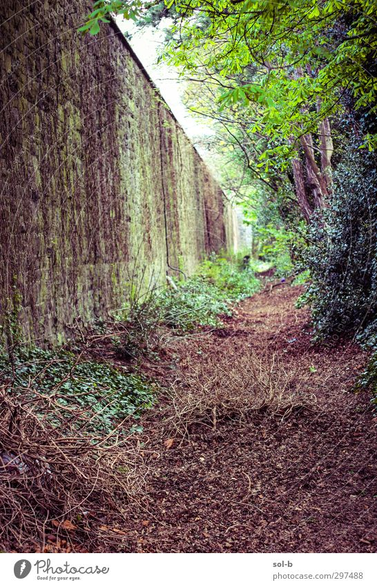 Lost Garden Nature Plant Tree Bushes Leaf Park Dublin Ireland Wall (barrier) Wall (building) Lanes & trails Old Dirty Natural Brown Green Loneliness Forget