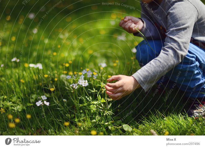 Human being Child Summer Hand Flower Calm Love Meadow Emotions Grass Spring Blossom Garden Infancy Sit Romance