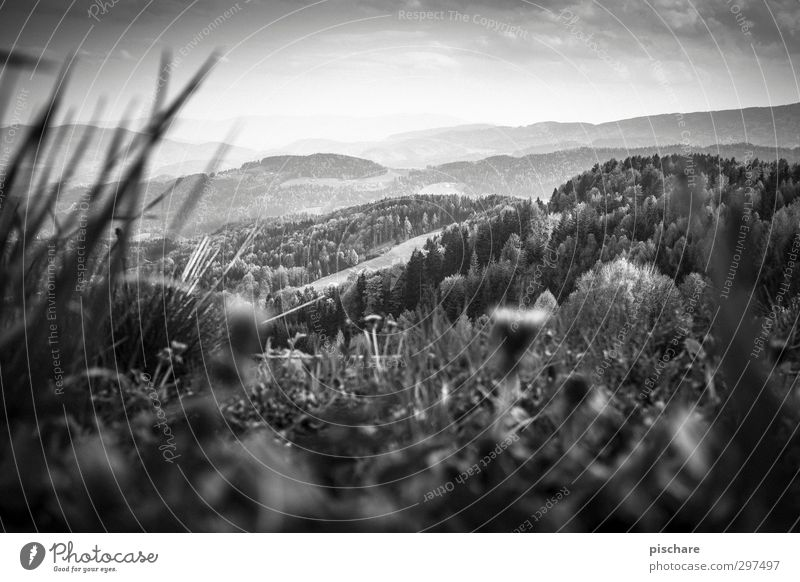Green Mark Nature Landscape Sky Grass Meadow Forest Hill Federal State of Styria Austria Black & white photo Exterior shot Day Twilight Light Contrast Blur