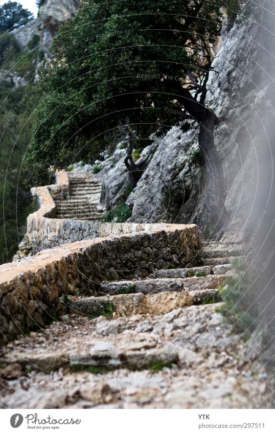 And I´m on my way Environment Nature Landscape Plant Spring Climate Weather Bad weather Tree Forest Rock Mountain Peak Wall (barrier) Wall (building) Stairs