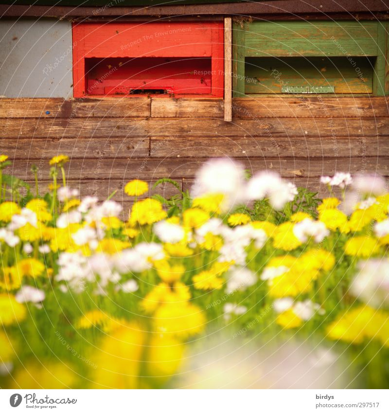 bee pasture Bee-keeper Bee-keeping Agriculture Forestry Spring Summer Beautiful weather Garden Flower meadow Beehive Honey flora Work and employment Blossoming