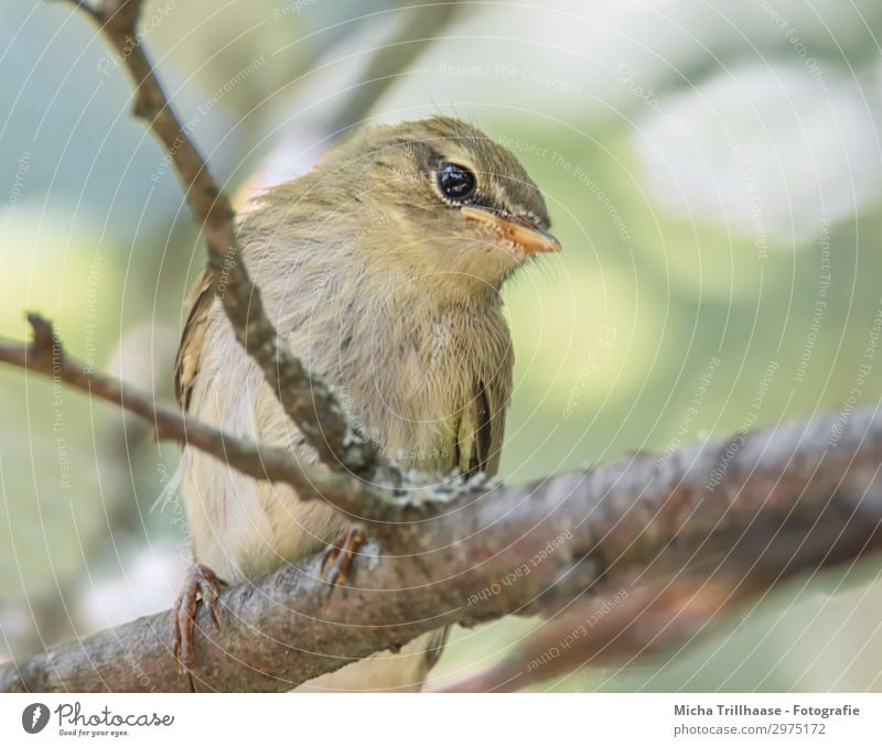 Young Fitis looks curious Nature Animal Sky Sunlight Beautiful weather Tree Twigs and branches Bird Animal face Wing Claw Leaf Warbler Head Beak Eyes Feather 1