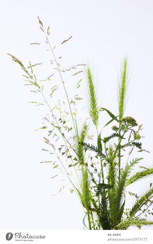 deciduous Lifestyle Elegant Wellness Harmonious Trip Summer Arrange Interior design Plant Grass Foliage plant Grass blossom Pollen Field Decoration Bouquet