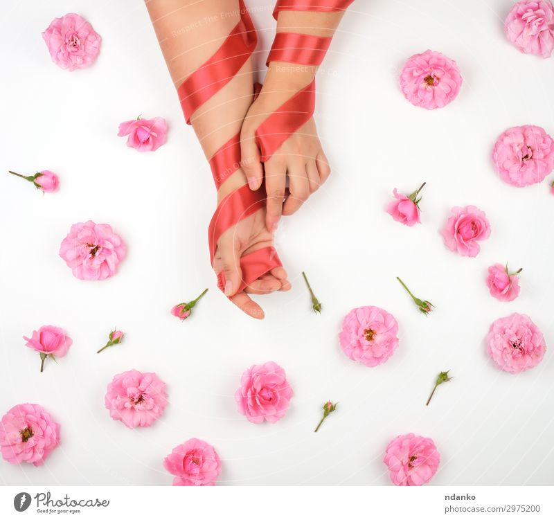 hands with smooth skin wrapped with red silk ribbon Woman Nature Summer Plant Beautiful White Red Hand Flower Adults Love Blossom Feasts & Celebrations Pink