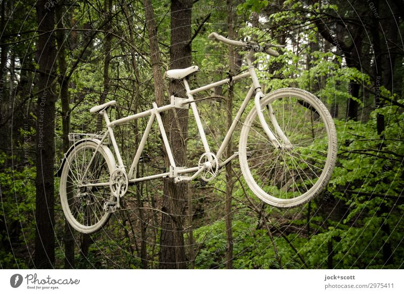 ghost wheel Trip Cycling tour tree Forest Müritz Means of transport Tandem Metal hang Exceptional green White Moody Watchfulness Sadness Death Design Idea