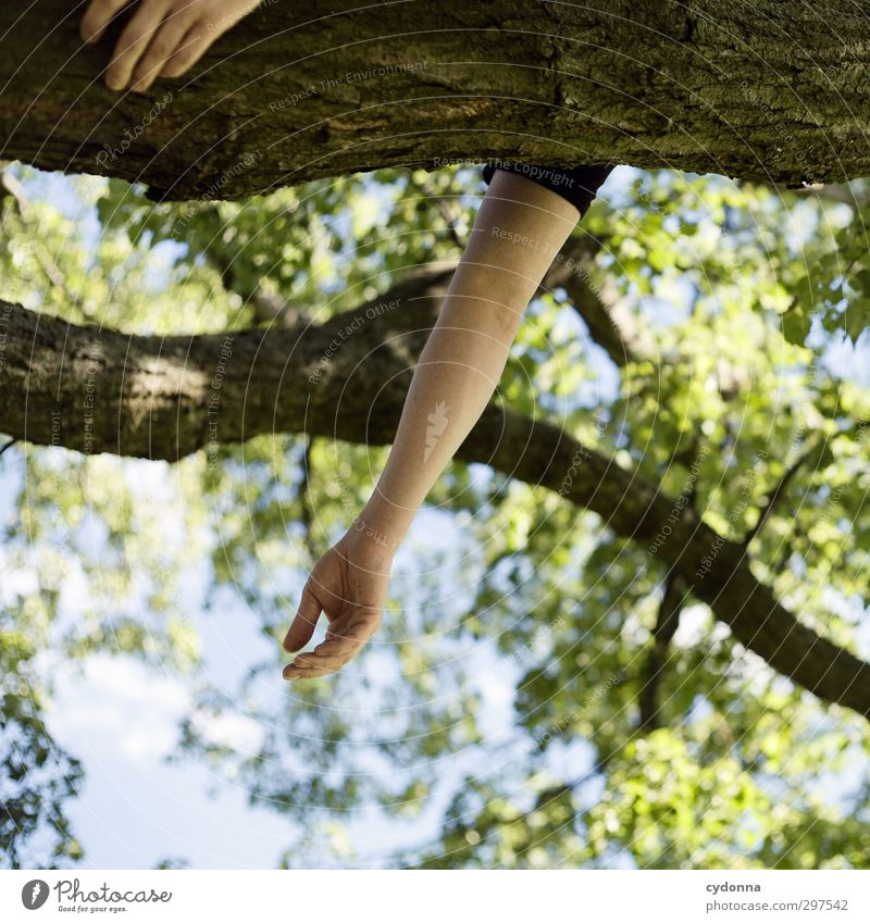Human being Nature Youth (Young adults) Vacation & Travel Summer Tree Hand Relaxation Calm Forest 18 - 30 years Adults Environment Life Spring Freedom