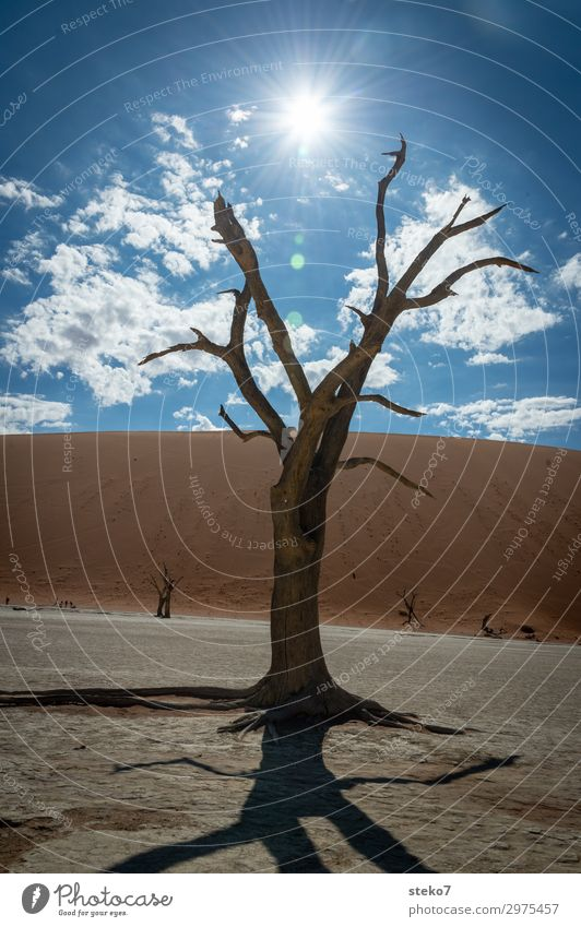 desert times Sun Tree Desert Namib desert Threat Hot Dry Blue Brown Yellow Apocalyptic sentiment Environmental pollution Change Sossusvlei Climate change