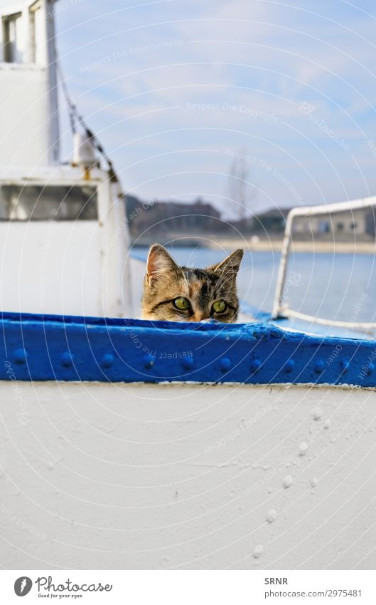 Sailor Cat Animal Watercraft On board Pet Hiking alley cat crawl out crawling out domestic animal Domestic cat hiding housecat outbred peek from peek out