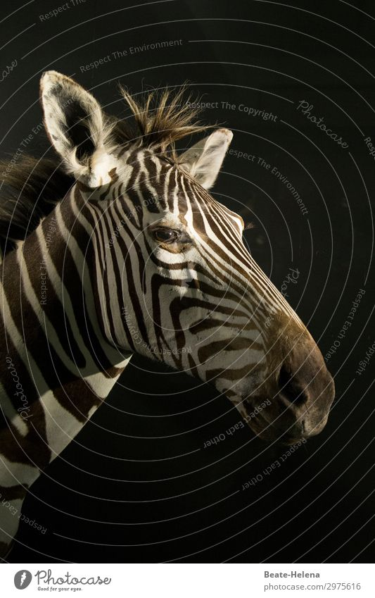 crosswalk Beautiful Vacation & Travel Tourism Adventure Far-off places Zoo Environment Nature Animal Hair and hairstyles Brunette Wild animal Zebra Line Stripe