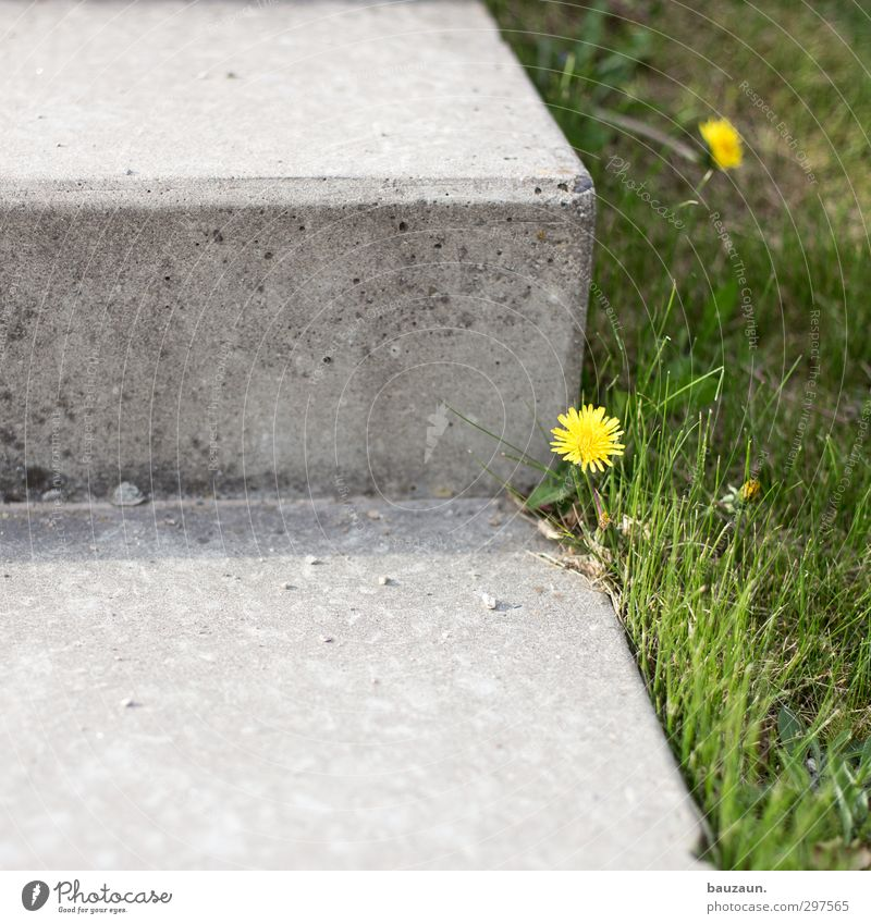 weed blossoms. Garden Sporting Complex Gardening Nature Earth Spring Summer Plant Flower Grass Blossom Dandelion Park Meadow Stairs Terrace Lanes & trails