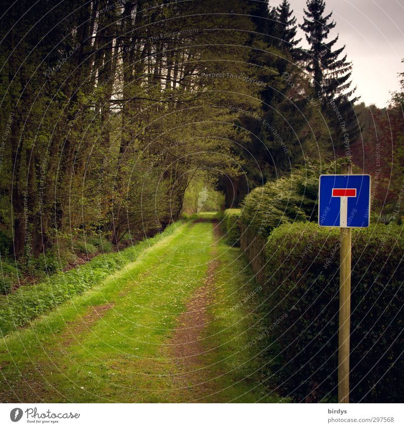 green cul-de-sac Nature Spring Summer Meadow Forest No through road Signs and labeling Road sign Exceptional Dark Natural Blue Green Lanes & trails Colour photo