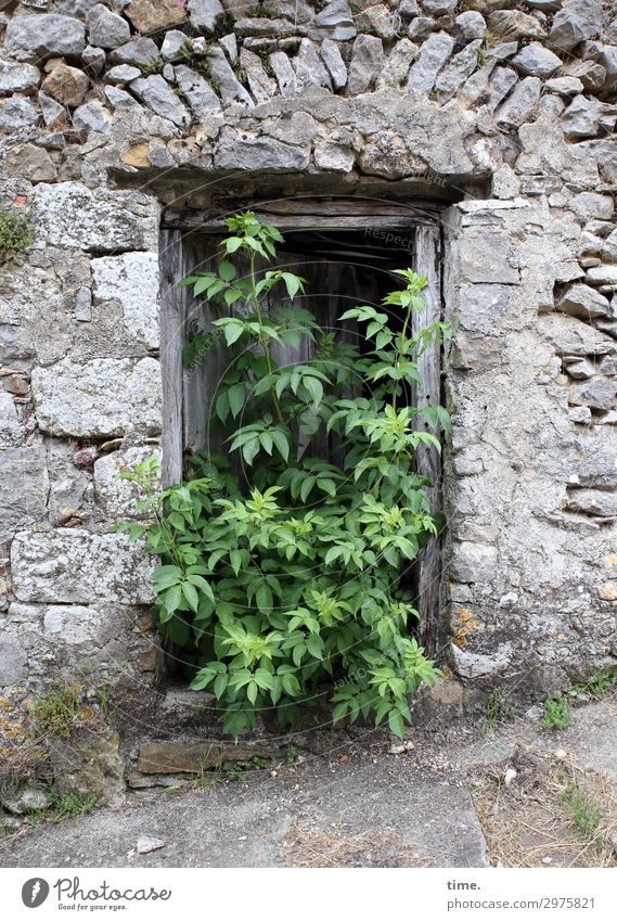 rural exodus Plant Tree Ruin Wall (barrier) Wall (building) Entrance Stone Wood Sign Exceptional Historic Curiosity Power Determination Truth Life Endurance