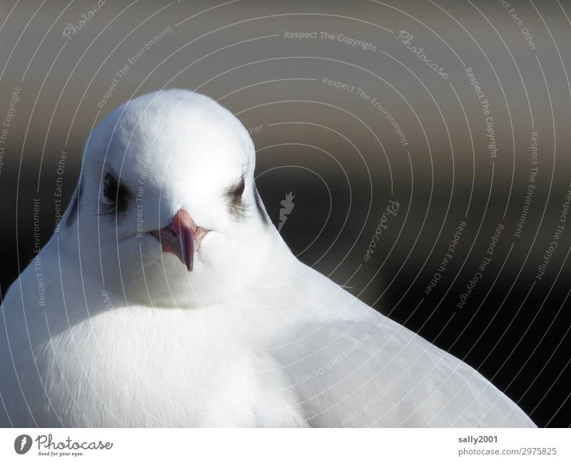 monthly Animal Wild animal Bird Animal face Seagull Beak 1 Observe Esthetic Elegant Beautiful Maritime Curiosity Cute White Feather Day Sunlight Animal portrait