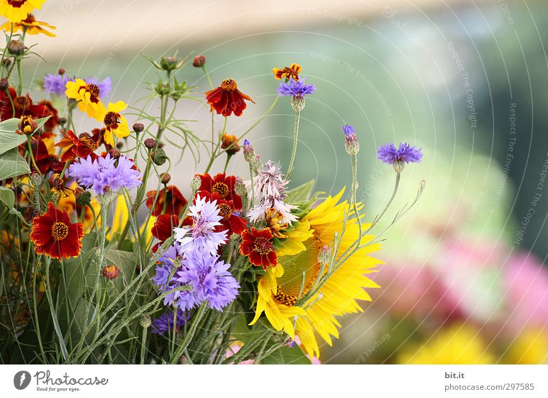 Preview of the summer Living or residing Feasts & Celebrations Valentine's Day Mother's Day Wedding Birthday Nature Plant Spring Summer Autumn Flower Garden
