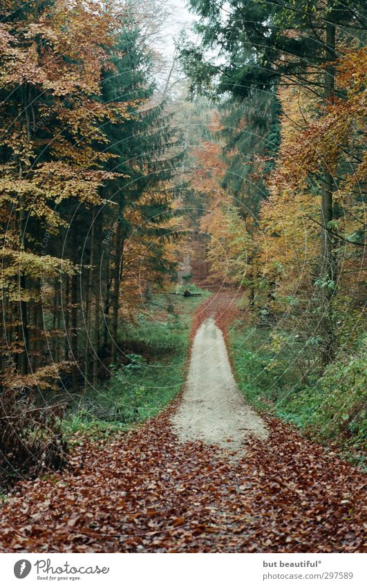 autumn picture with way or so° Environment Nature Landscape Autumn Tree Forest Attentive Watchfulness Serene Patient Calm Colour photo Exterior shot
