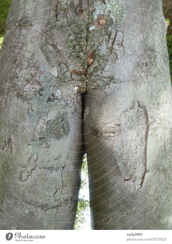 Tree model with slim bottom... tree bark buttocks Bottom Slim shape Gray scars Naked Nature natural Body Figure Model Old