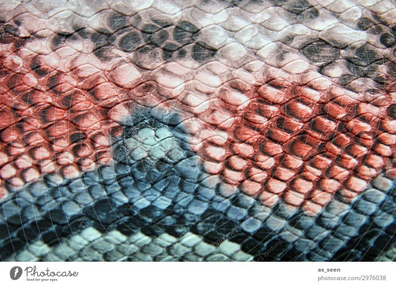 snake pattern Luxury Elegant Style Design Fashion Leather Snakeskin Snake skin Wavy grain Animal Esthetic Cool (slang) Exotic Hip & trendy Blue Brown Pink Red